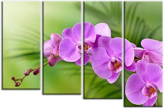 Модульные картины. Ветка орхидеи
