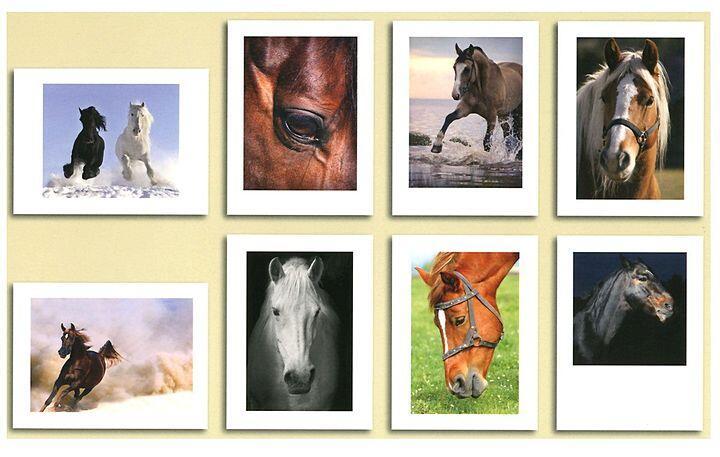 Постеры с изображениями лошадей