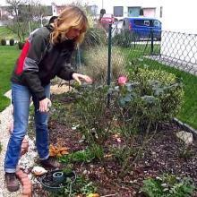 Нужно ли обрезать розы на зиму и когда лучше этим заниматься?