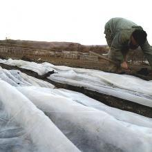 Как укрывать клубнику на зиму правильно и когда это лучше делать