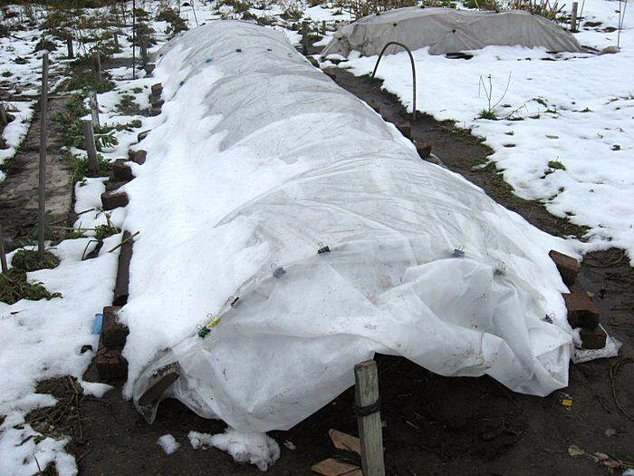 Укрытие роз на зиму в форме тоннеля