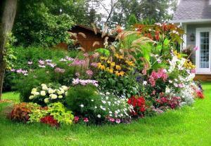 Как посадить красиво цветы на даче