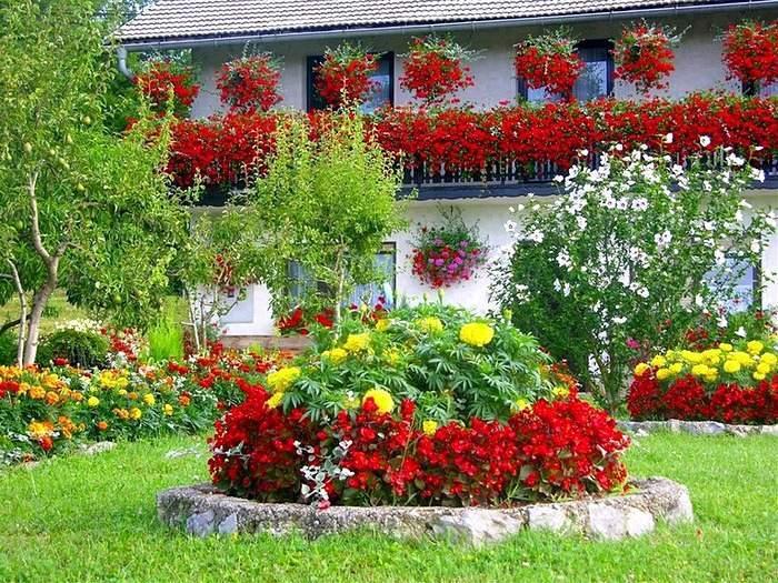 Яркие цветы на даче