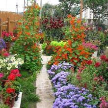 Самые неприхотливые цветы для дачи: 50 проверенных вариантов
