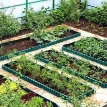 Как правильно разбить сад и огород: схемы посадки и реальные фото