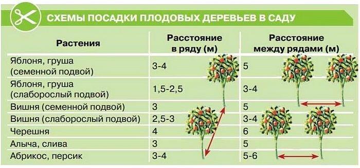 Правильная схема посадки плодовых деревьев
