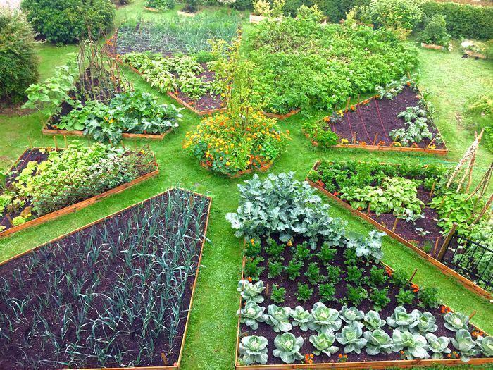 Оригинальная схема посадки огорода