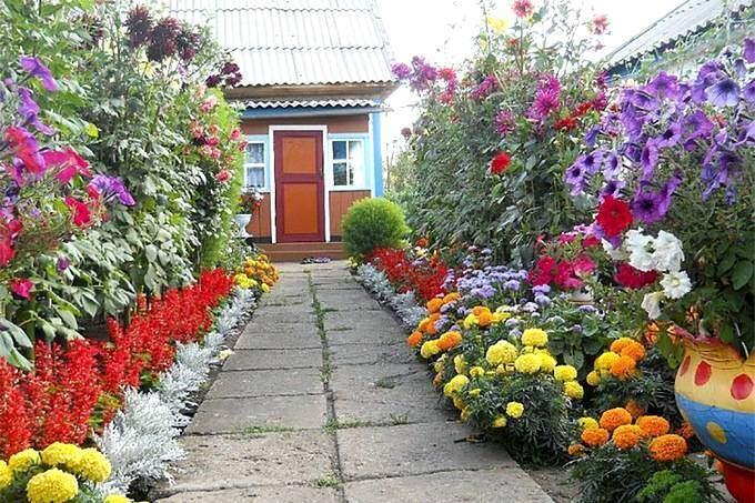 Цветник с высокими цветами на даче